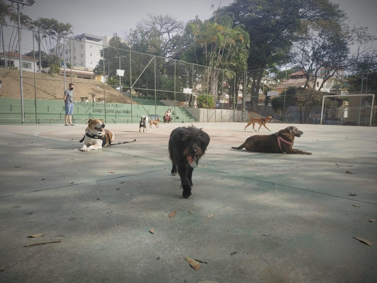 'Praça dos cachorros' desestressa pets e seus tutores em BH sem aglomeração na pandemia; FOTOS