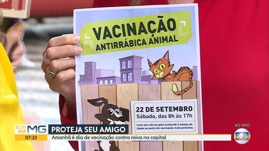 Mais de 350 postos distribuem vacinas contra raiva para cães e gatos em Belo Horizonte