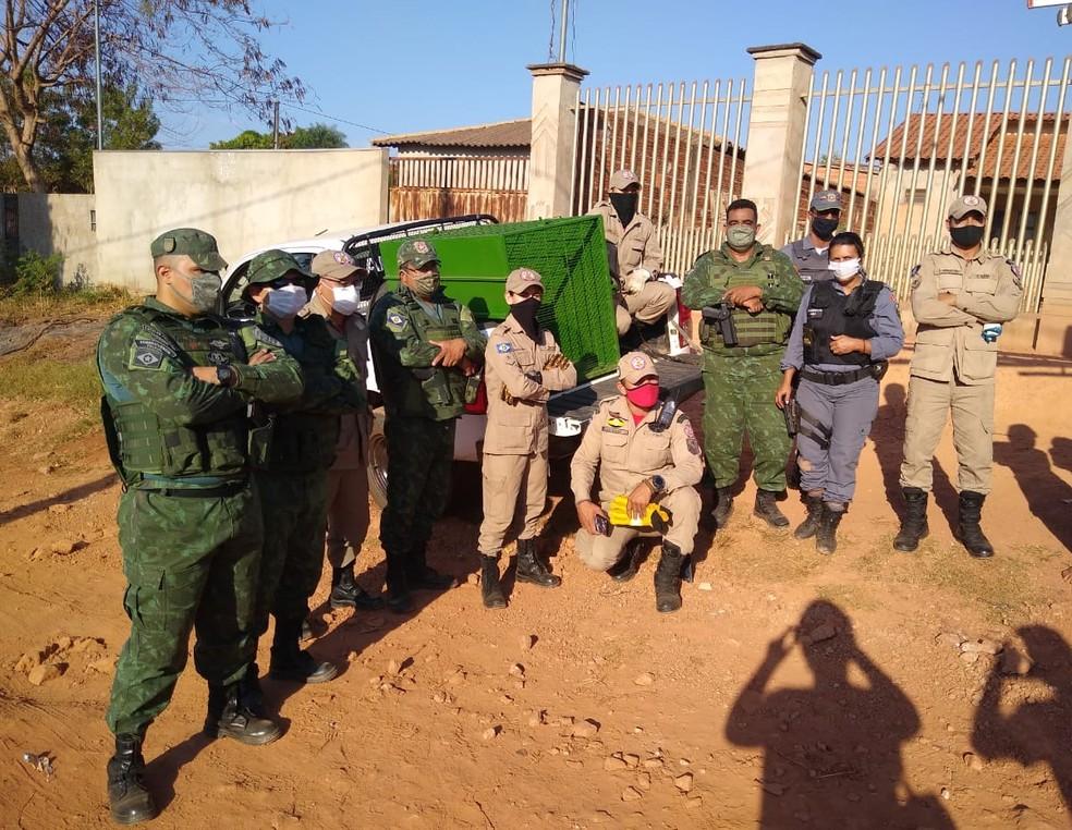 Corpo de Bombeiros e Polícia Ambiental fizeram o resgate da jaguatirica — Foto: Polícia Militar