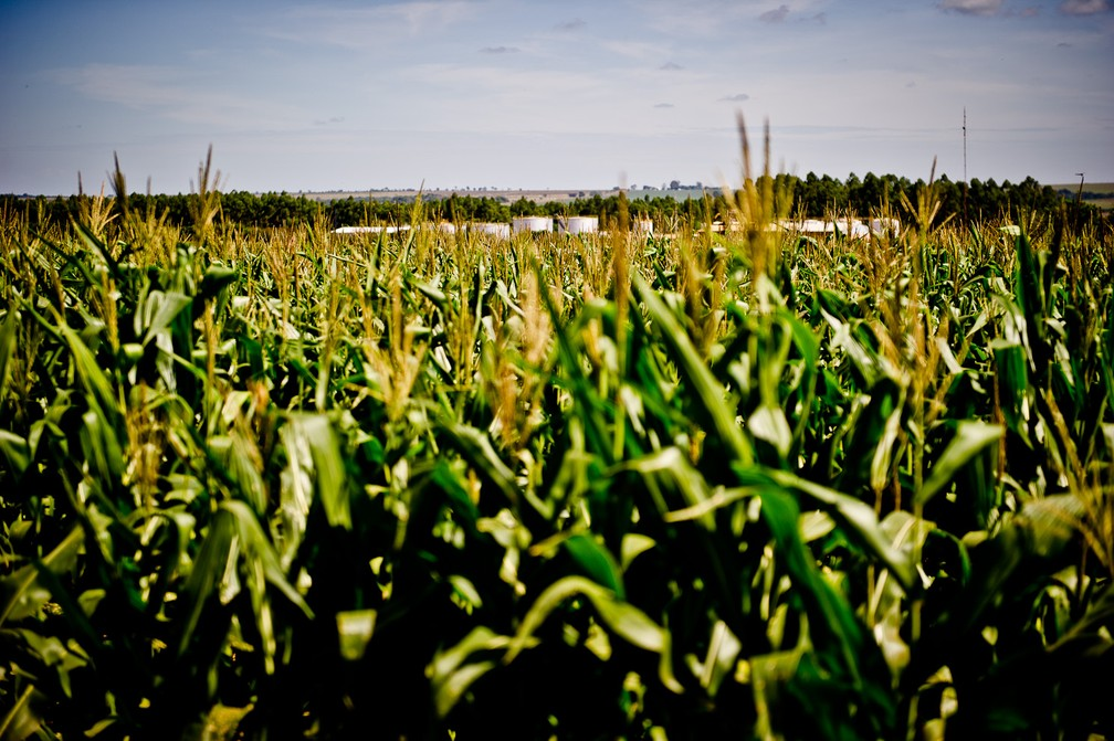 Mato Grosso é o maior exportador de milho do país — Foto: Mayke Toscano/ Gcom-MT