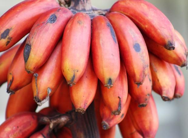 Frutas: Banana vermelha (Foto: Thinkstock)