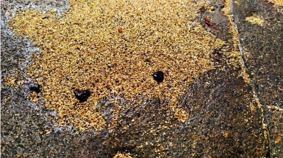 Fragmentos de óleo na praia norte da Ilha de Santa Bárbara — Foto: Divulgação/Marinha