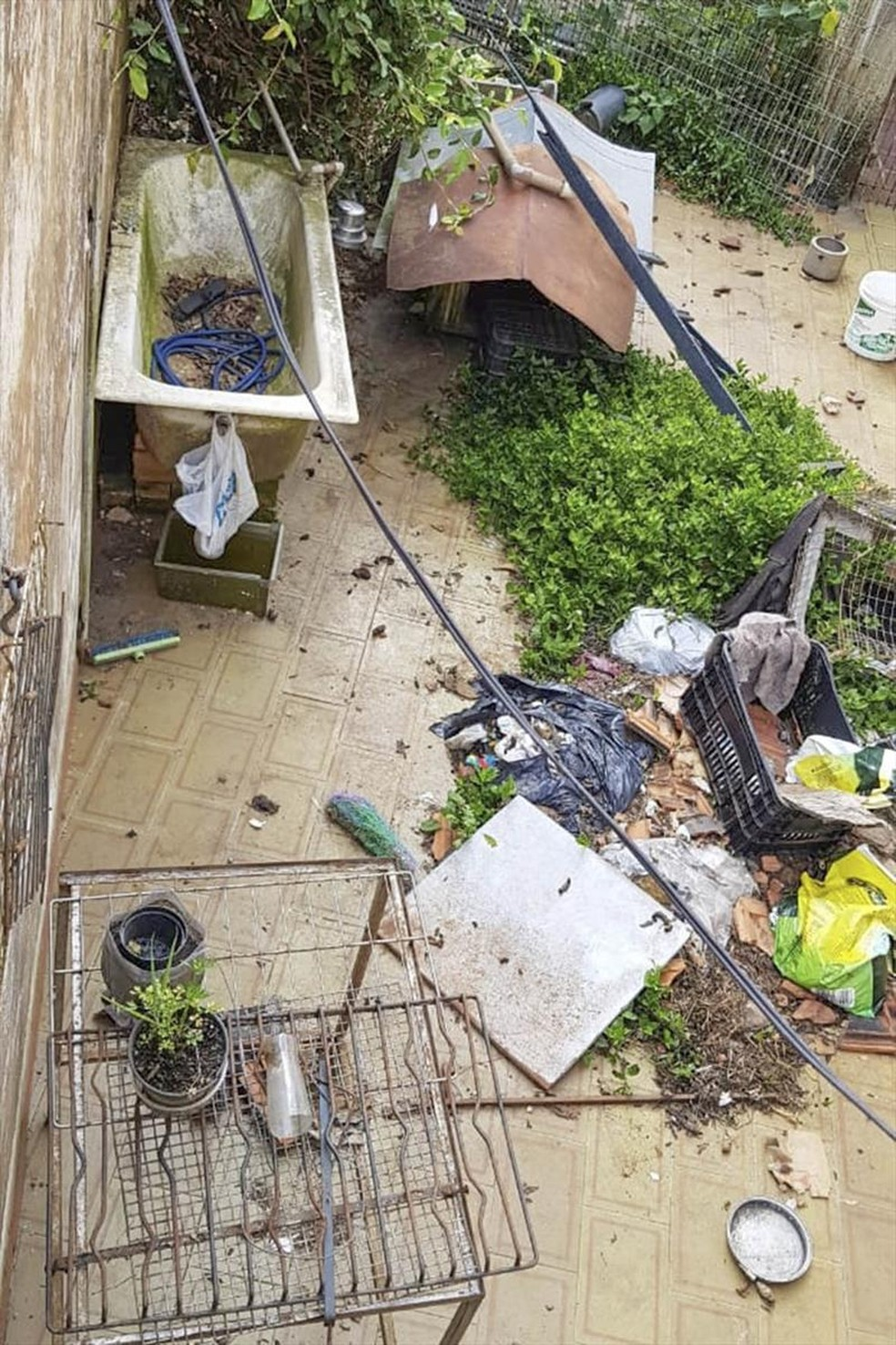 Funcionários constataram, principalmente, falta de higiene no ambiente e nos cachorros — Foto: Divulgação/Prefeitura de Curitiba