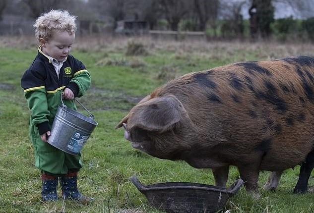 Freddie alimentando um dos porcos da fazenda (Foto: Reprodução Daily Mail)