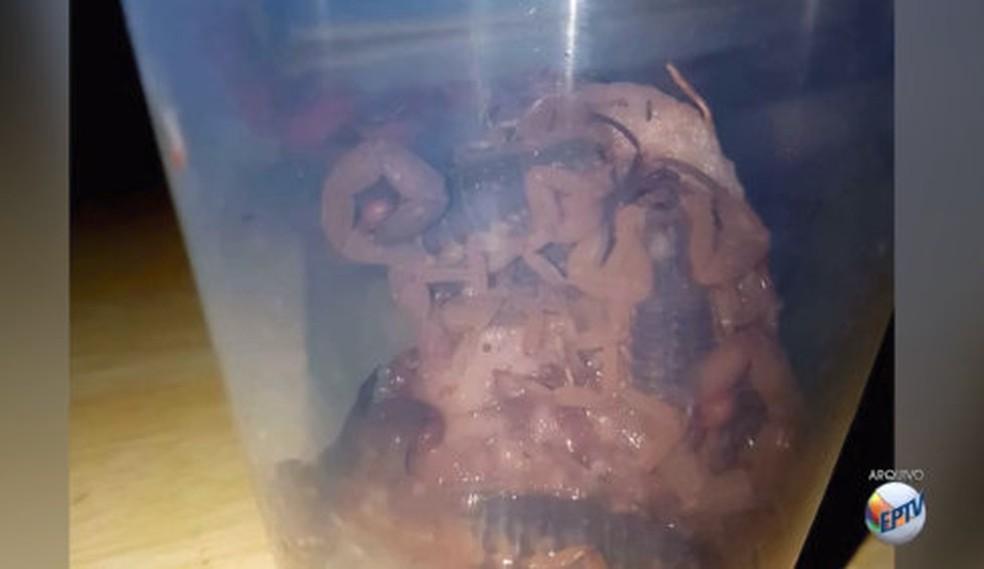 Escorpiões amarelos foram encontrados em creche de Araraquara (Foto: Reprodução/ EPTV)