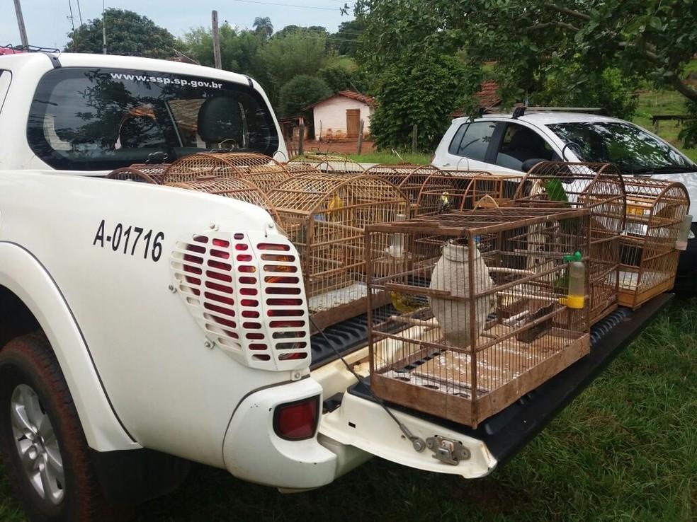 Polícia Ambiental resgatou 17 aves silvestres em Santa Cruz das Palmeiras (Foto: Polícia Ambiental de Pirassununga/Divulgação)