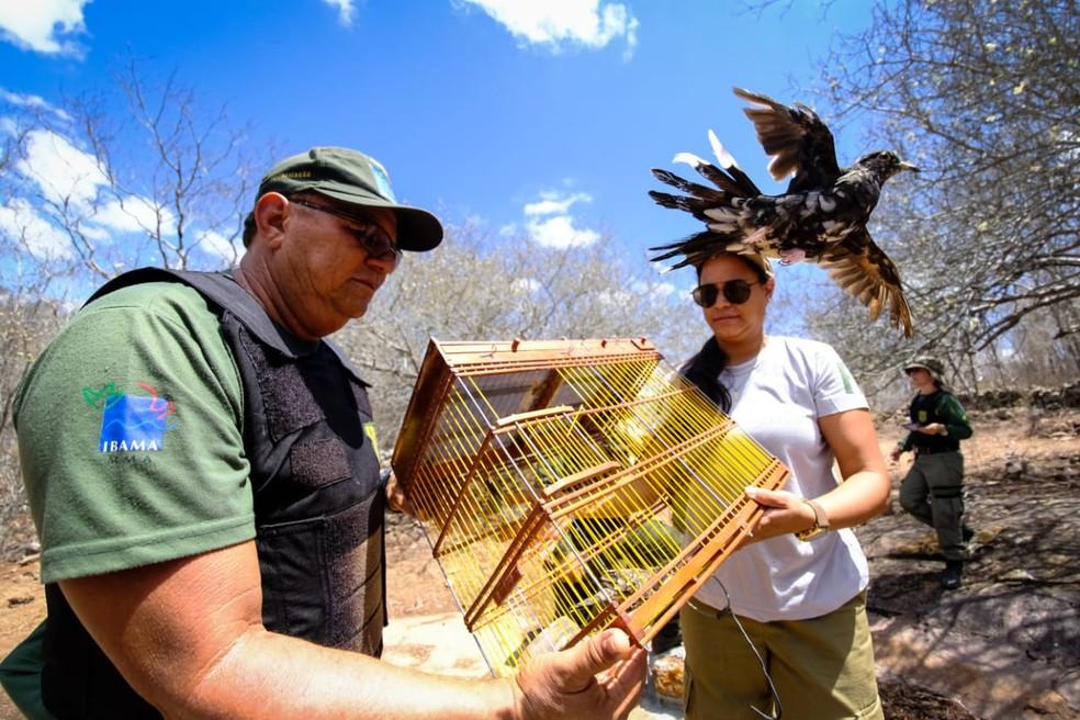 Ave silvestre é devolvida à natureza em Alagoas — Foto: Jonathan Lins/FPI do São Francisco