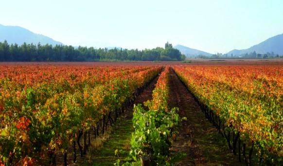 Santa Carolina, uma das vinícolas mais antigas do Chile