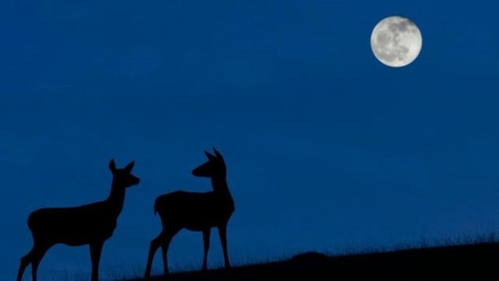 A 'Lua Azul' poderá ser vista na noite de 31 de outubro quando o céu estiver limpo. — Foto: GETTY IMAGES