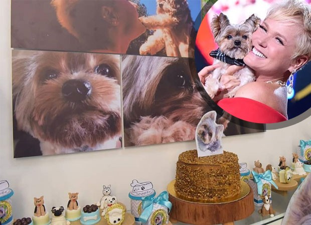 Dudu, cachorro de Xuxa, ganha festa (Foto: Reprodução)