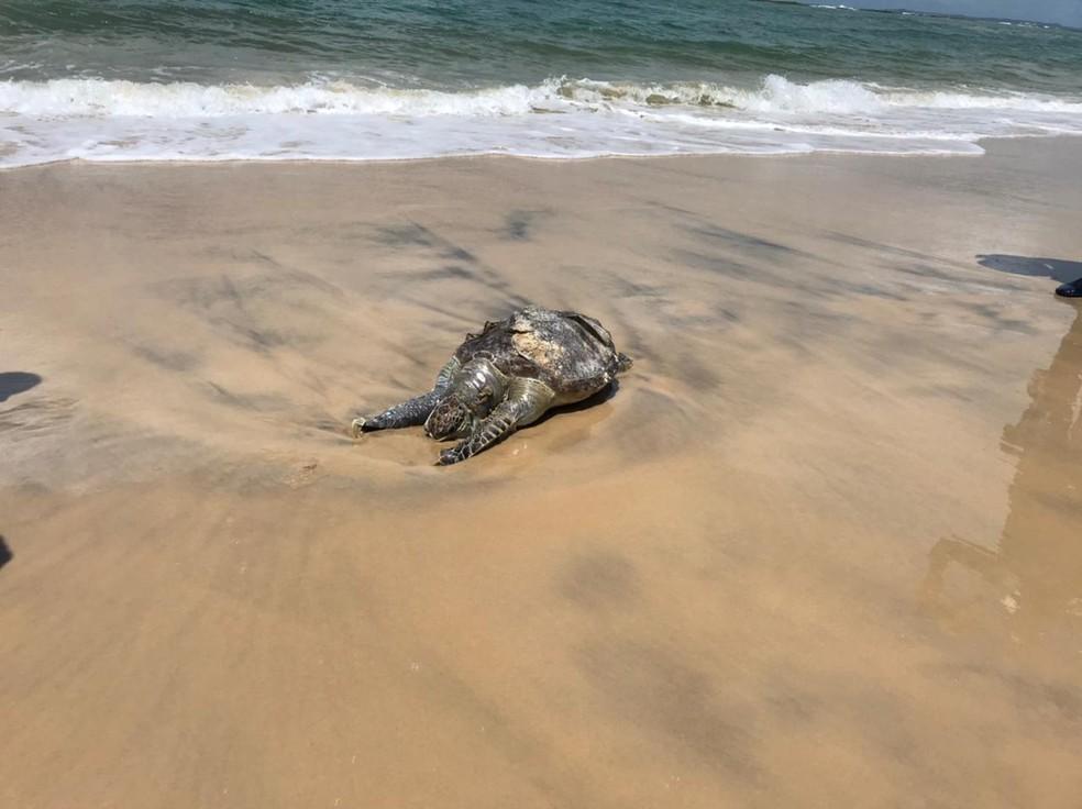 Tartaruga é encontrada morta na praia de Tabatinga, em Nísia Floresta, RN — Foto: Ayrton Freire/Inter TV Cabugi