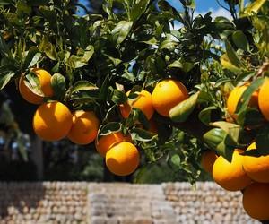 Governo publica novo zoneamento de risco climático para citros