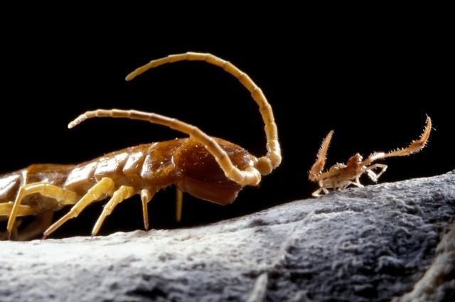 33 espécies novas foram descobertas na caverna romena (Foto: Divulgação)