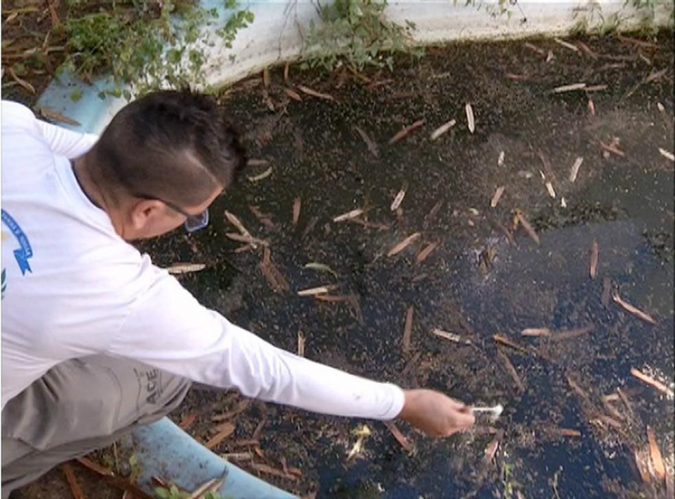 Produto combate larvas do Aedes aegypti  — Foto: Reprodução