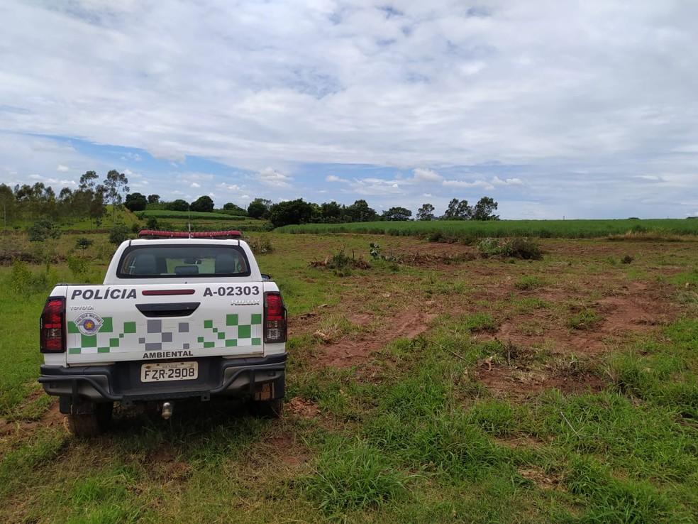Fiscalizações constataram derrubada de 144 árvores nativas na região de Presidente Prudente — Foto: Polícia Militar Ambiental