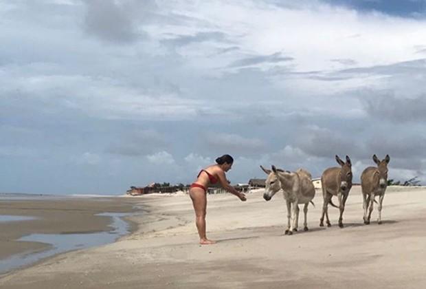 Gloria Pires se diverte com jegues em praia do Piauí (Foto: Reprodução/Instagram)