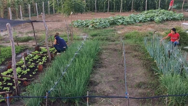 irrigação-agricultura-familiar (Foto: Divulgação/Mudas)
