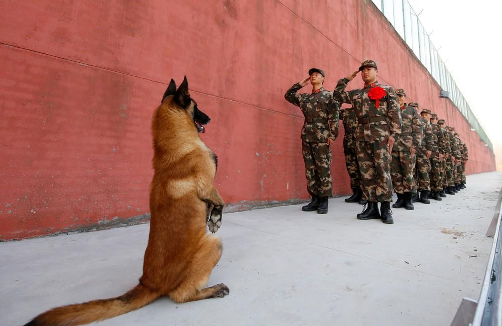 Tropa 'bate continência' para cachorro na China (Foto: REUTERS/Stringer)