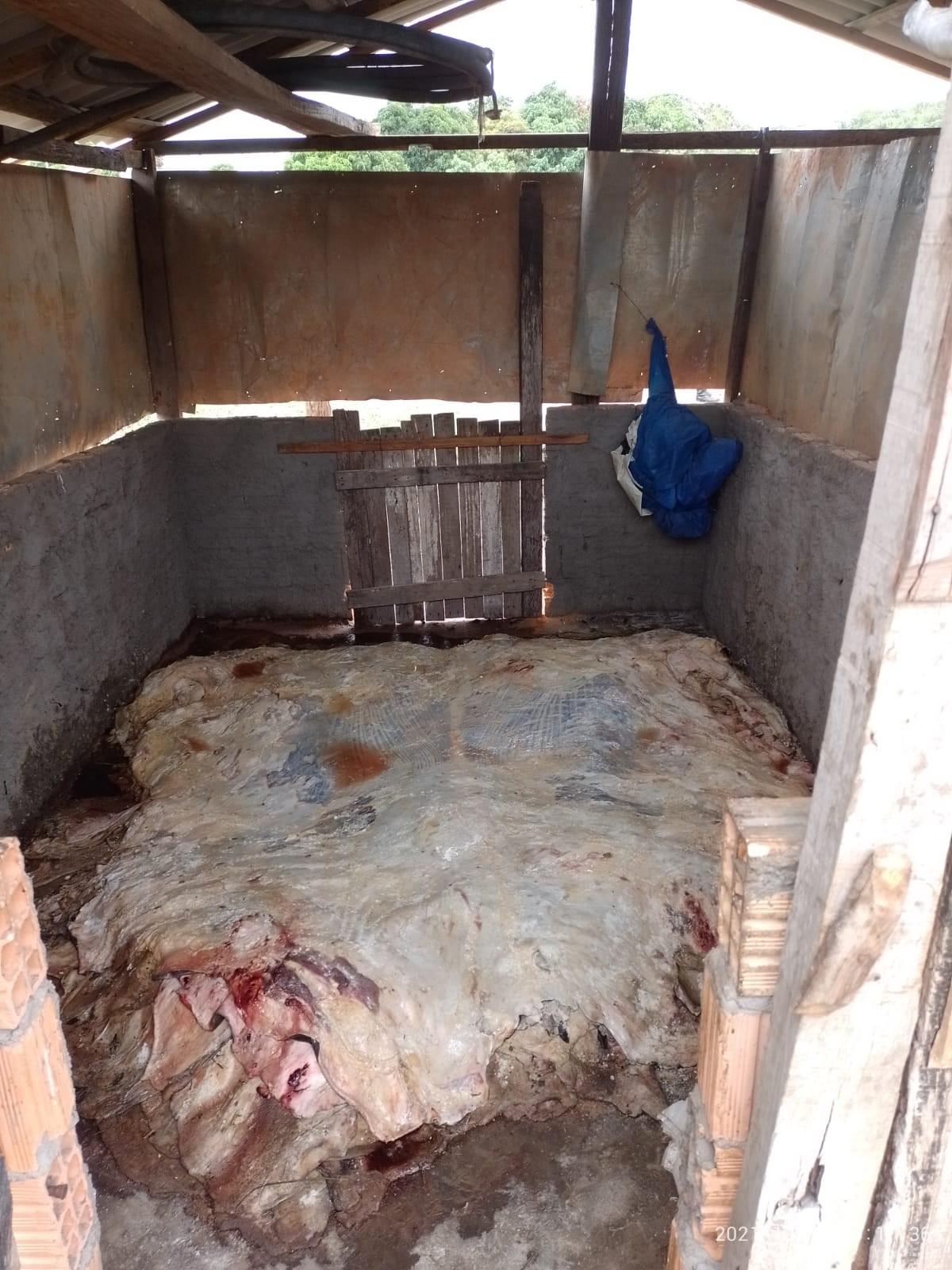 AGED interdita dois abatedouros clandestinos no Maranhão