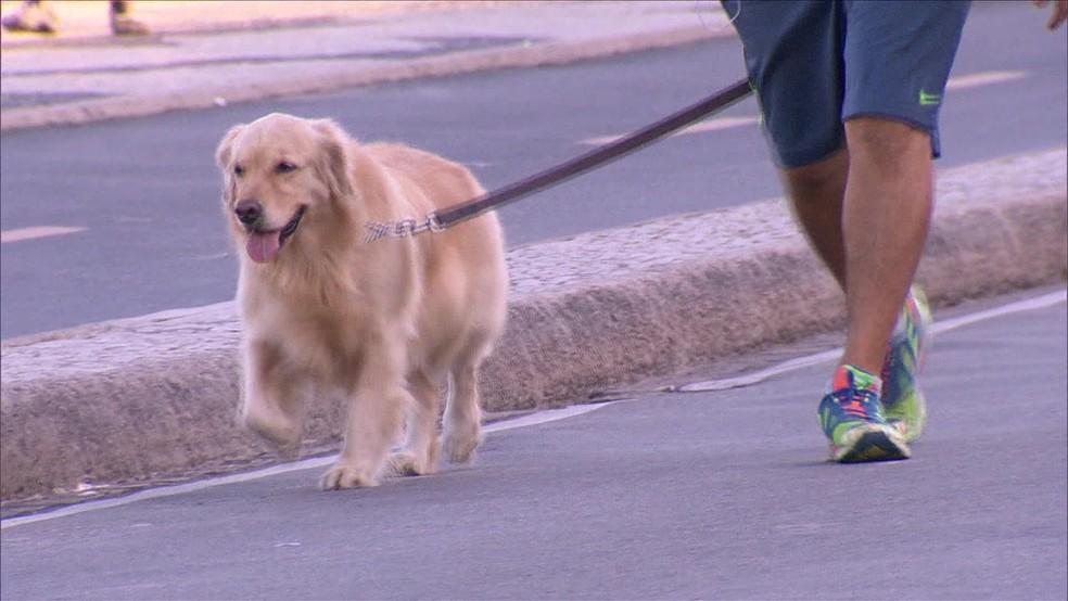 Animais domésticos podem entrar em hospitais do Rio — Foto: Reprodução / TV Globo
