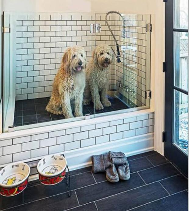 Dog shower: o box evita que espirre água para o resto do ambiente (Foto: Pinterest/Reprodução)