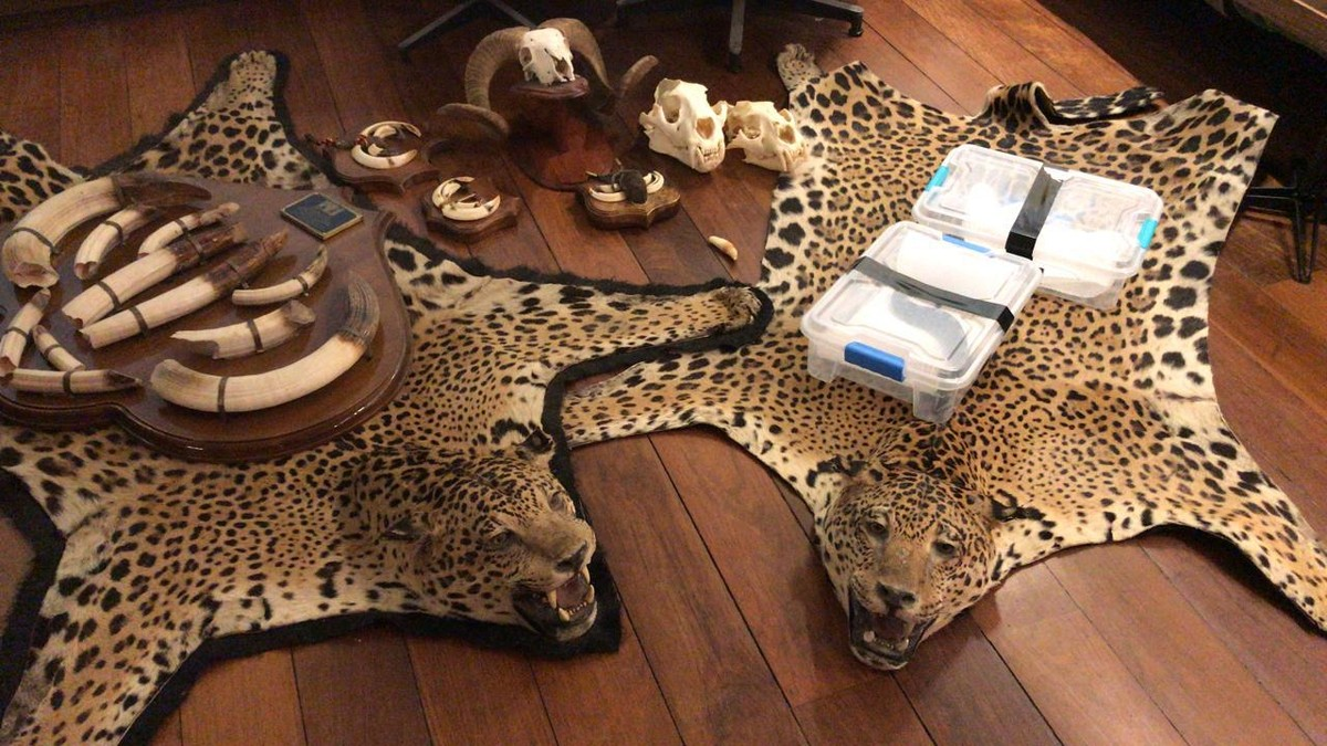 Ação da PF contra o tráfico internacional de animais encontra cobras e tapetes de onça no Rio – G1