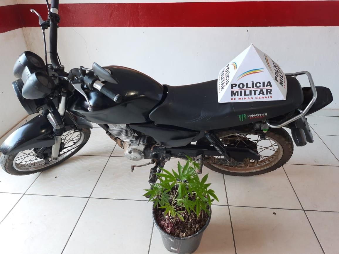 Polícia apreende pés de maconha e recupera moto furtada na zona rural de Caraí