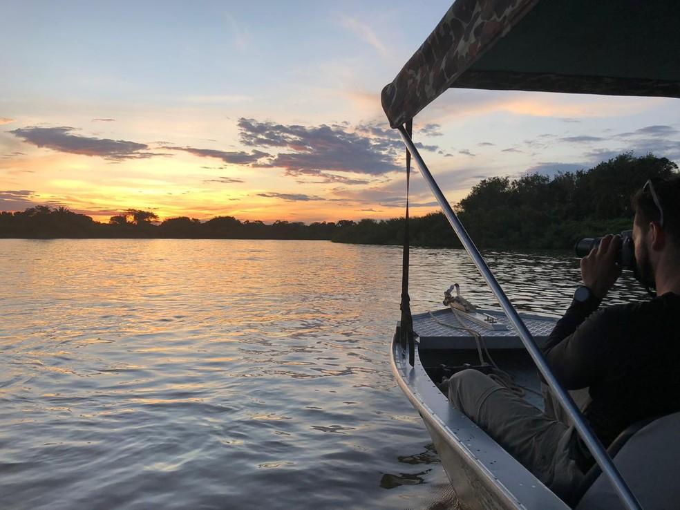 O 'carro-chefe' do ecoturismo no estado é a observação de onças-pintadas durante passeios de barcos em rios do Pantanal de Mato Grosso — Foto: Ailton Lara