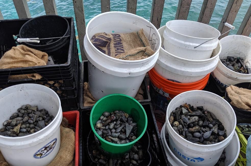 Chumbadas recolhidas pelos mergulhadores na Flórida — Foto: Reprodução/Jack Fishman/Facebook