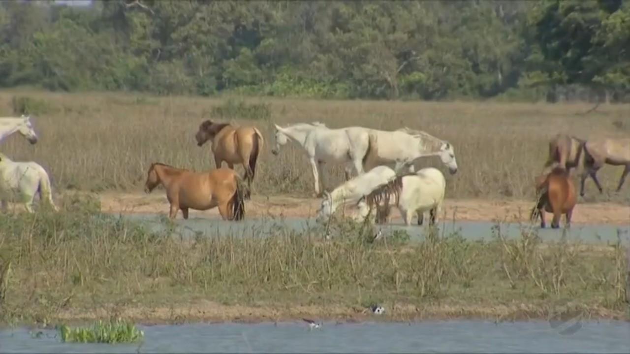 Fenômeno La Niña pode ocasionar uma das maiores estiagens dos últimos 30 anos no Pantanal em MT