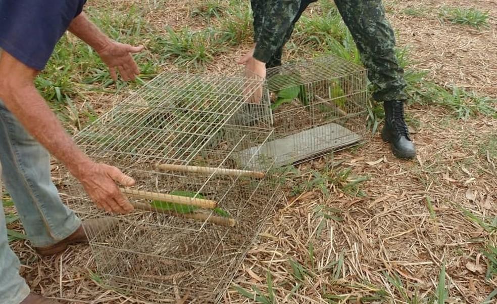 Maritacas foram soltas em uma fazenda em Pindorama (Foto: Divulgação/Prefeitura)