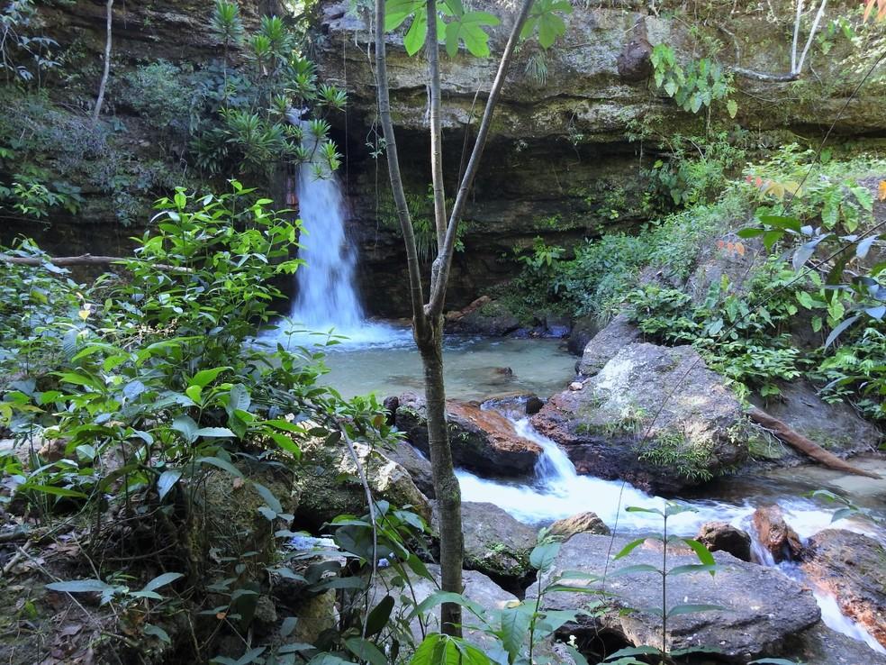 Sucuri foi encontrada na Cachoeira da Pedra Furada — Foto: Welinton Mendes/Arquivo pessoal