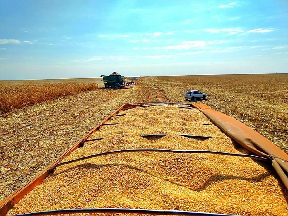 Produção de milho ajudou no resultado da safra brasileira em 2019 — Foto: Aprosoja-MS/Divulgação