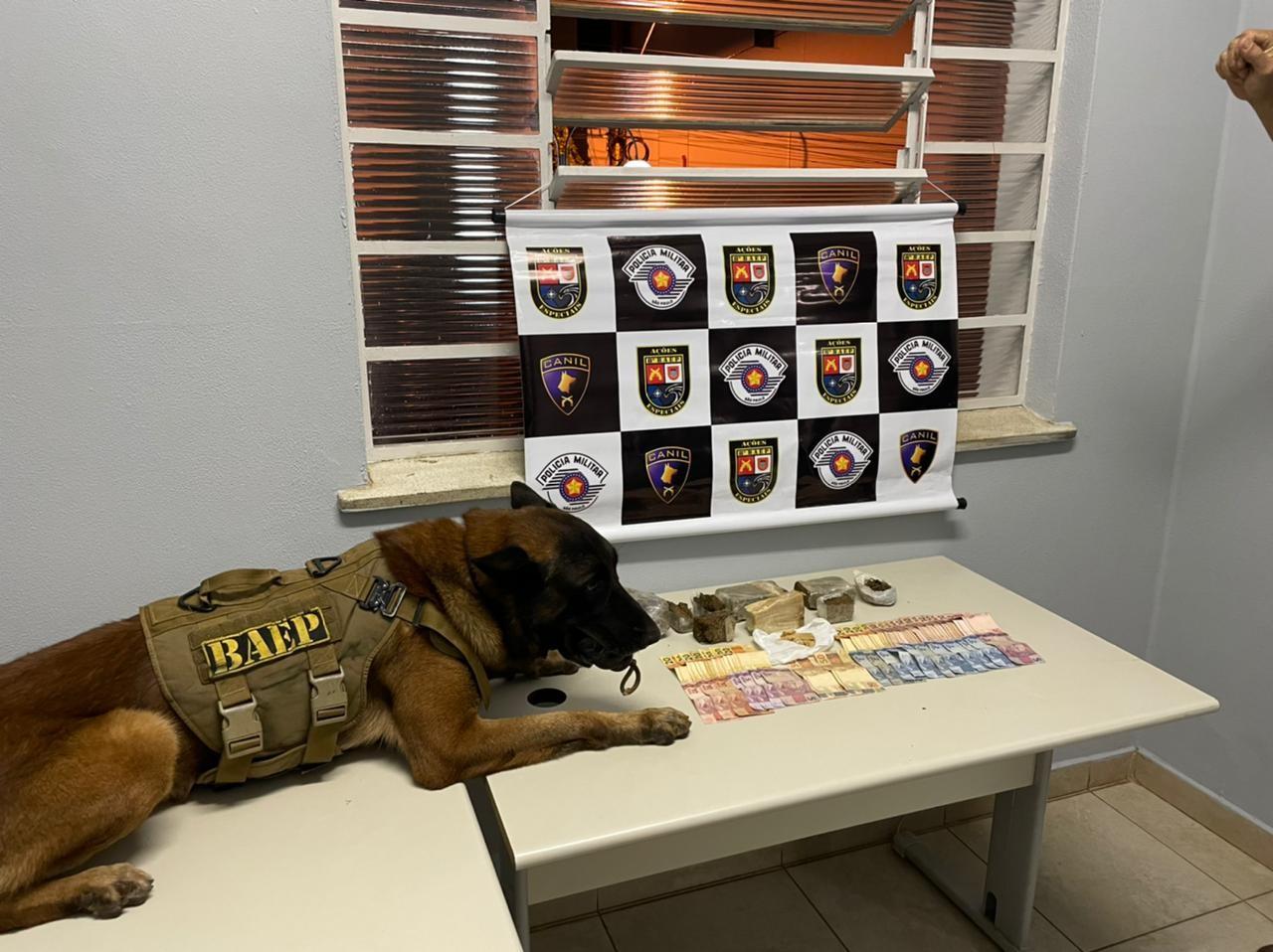 Com apoio de cão farejador, PM localiza drogas e detém adolescente de 13 anos e rapaz em Presidente Prudente; veja VÍDEO