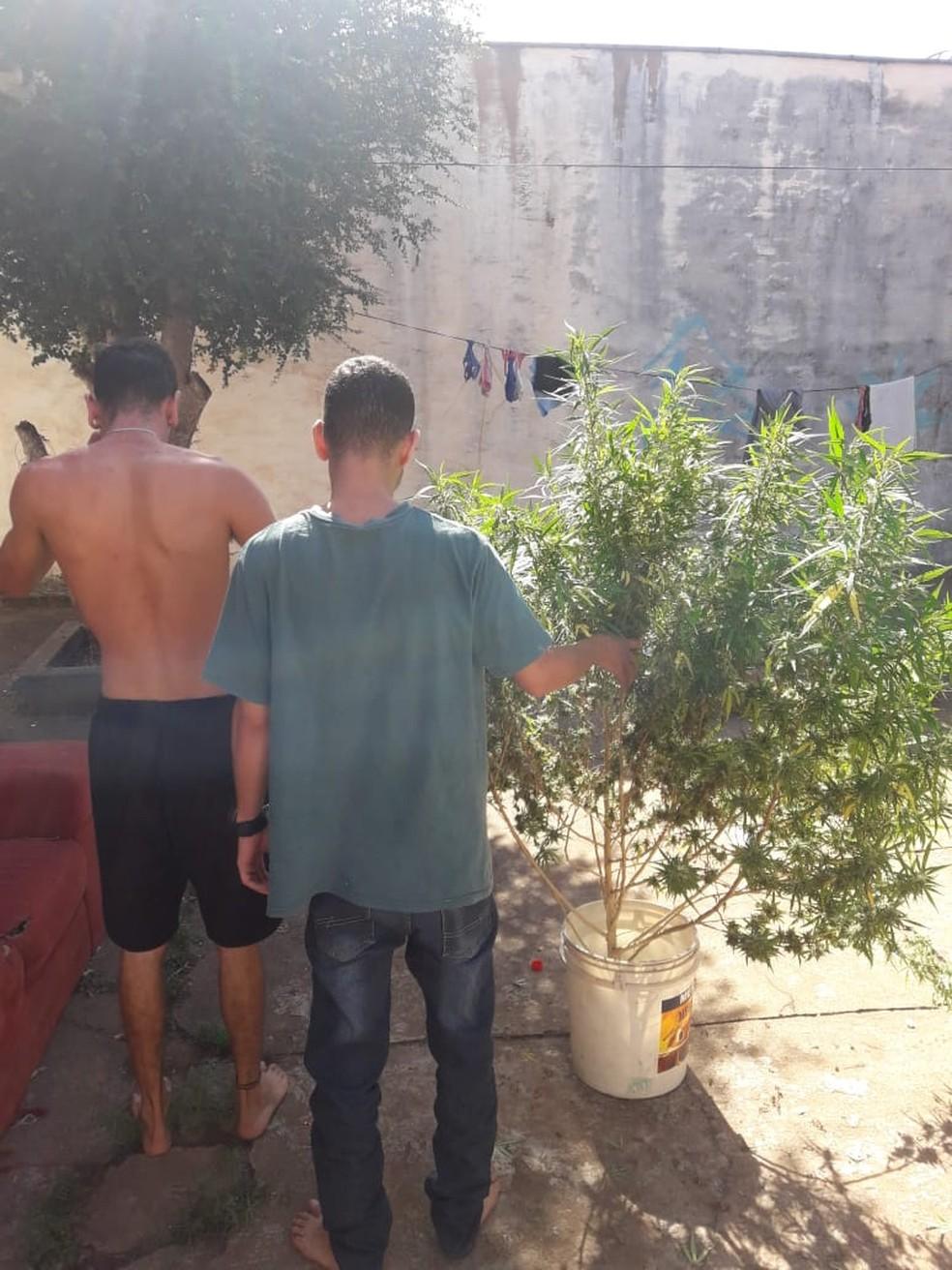 Polícia identificou jovem que plantou maconha e também conversou com usuários no local em MS --- Foto: Polícia Civil/Divulgação