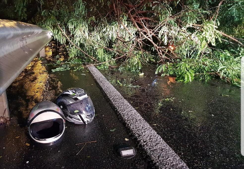 O condutor e o garupeiro da moto tiveram ferimentos leves após atingirem os galhos da árvore. — Foto: Rafaela Duarte/Verdes Mares
