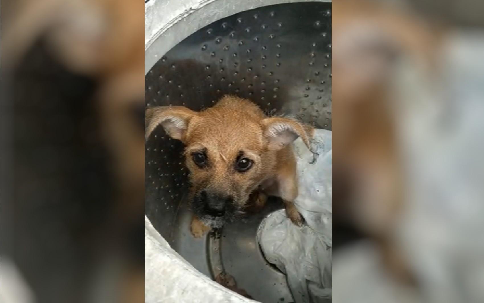 Cadela aguarda adoção após ser abandonada em lata de lixo, em Anápolis; vídeo