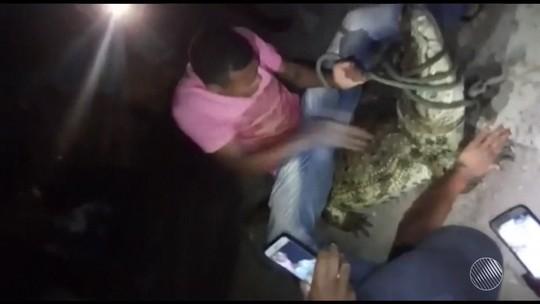 Envolvidos em sessão de agressões contra jacaré na BA são ouvidos pela polícia e dizem que foi brincadeira de mau gosto