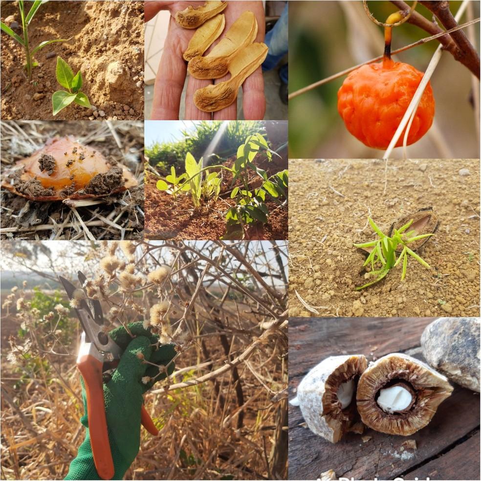 Vegetação típica do cerrado — Foto: Allf Lima