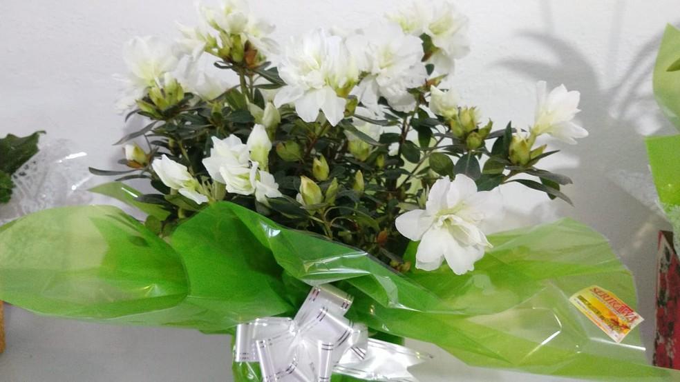 Floricultura aposta em vasos de tamanhos diversos como opção de presentes para o Dia dos Namorados— Foto: Floricultura Serikwa/Divulgação