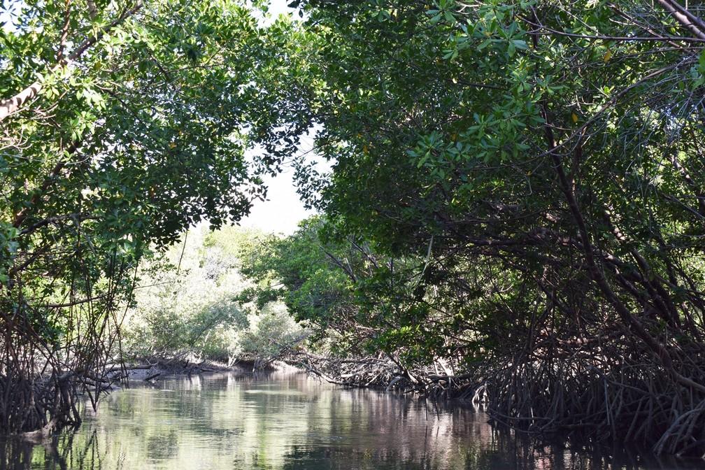 Gamboas são caminhos que se formam em meio à vegetação dos mangues e que se enchem de água com o fluxo da maré alta (Foto: Maxwell Almeida)