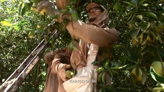 Safra de laranja anima produtores do noroeste do Paraná