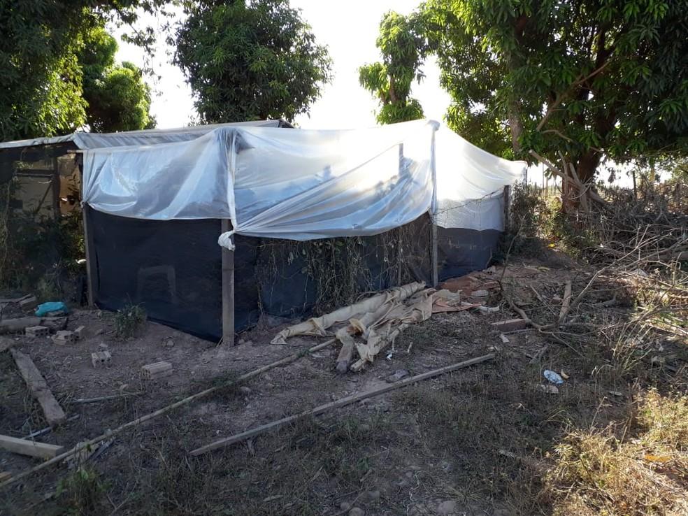 Irmãos são presos com plantação de maconha e estufa para cultivo da droga em Paranatinga (Foto: Polícia Civil de MT/Assessoria)