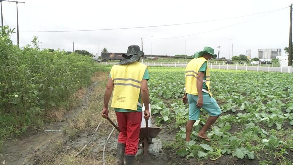 Irmãos Sivaldo Francisco dos Santos e Silvano Francisco da Silva em plantação familiar — Foto: Reprodução/TV Globo