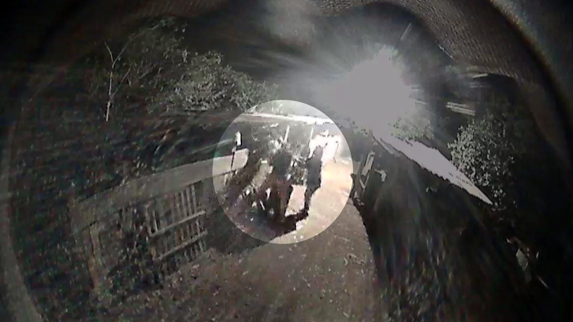 Câmera em chiqueiro flagra furto de três porcos na zona rural de Ipuã, SP
