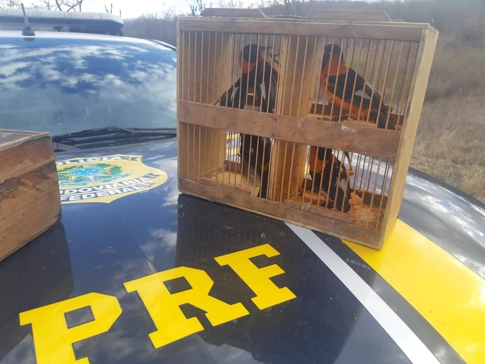 Pássaros silvestres foram apreendidos pela PRF, em Pesqueira — Foto: PRF/Divulgação