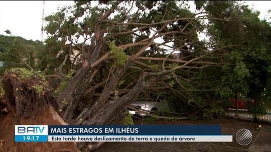 Chuva derruba árvore sobre carros e provoca deslizamentos em Ilhéus