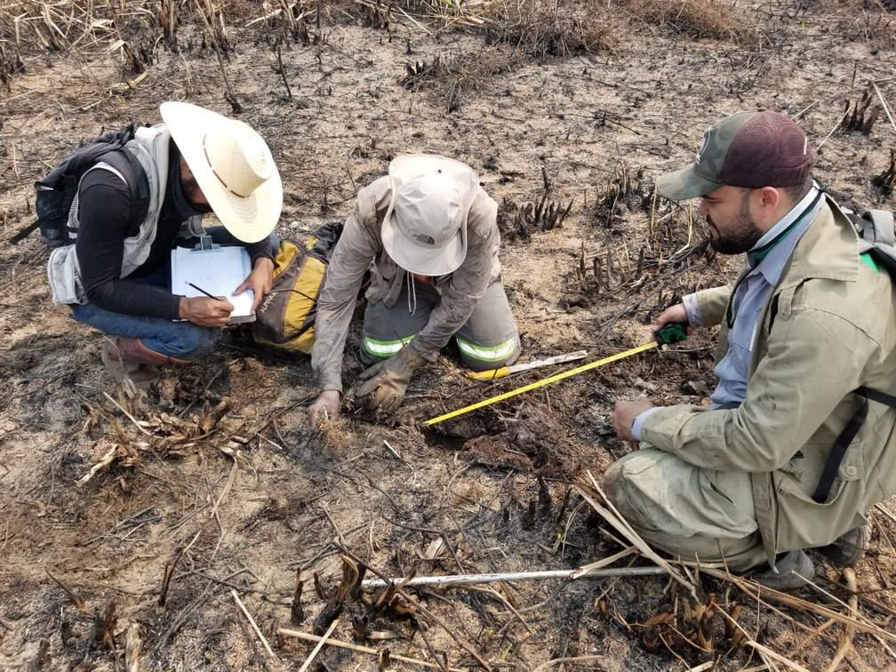 Integrantes da força-tarefa levantam quantidade de animais mortos em queimadas no Pantanal — Foto: Christine Strussmann/Arquivo Pessoal