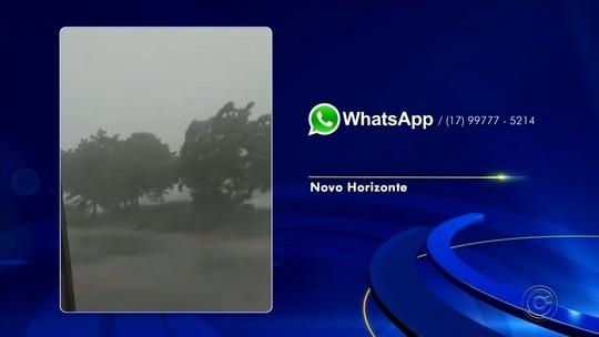 Temporal arranca árvores em Novo Horizonte