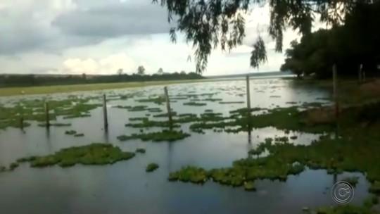Barragem de Barra Bonita abre comportas para combater plantas aquáticas